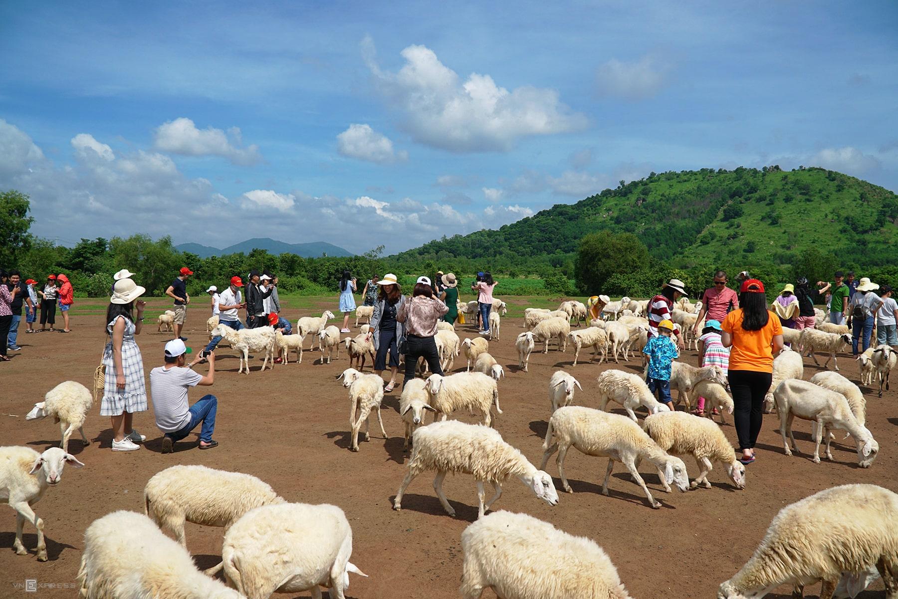 check in Đồng Cừu Suối Nghệ