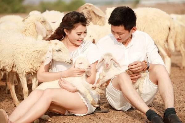 chụp hình cưới ở đồng cừu suối nghệ